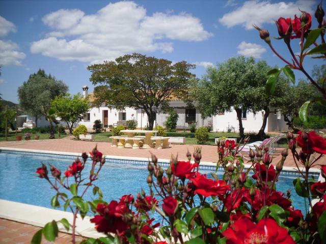 Dům-Gite Lora del Rio, Sevilla Zahrada