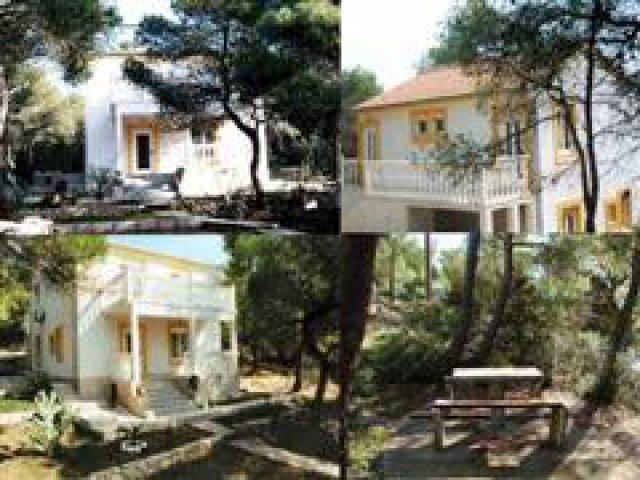 Photos for house 508814