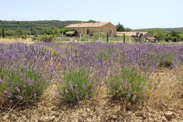 Gite-Holiday House Lussan