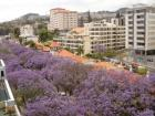Apartment Funchal Holiday - Ferielejlighed Funchal