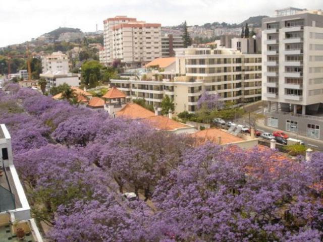 Ferielejlighed Funchal Ferieejendom