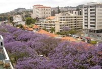 Apartment Funchal Holiday